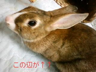 PA0_0878.jpg
