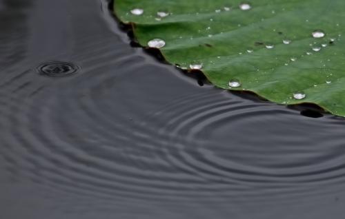 D20_0159はっぱ02旬雨