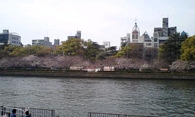 桜(天満橋にて)