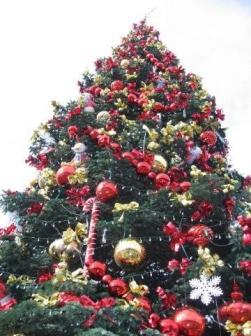 Pier39 Tree
