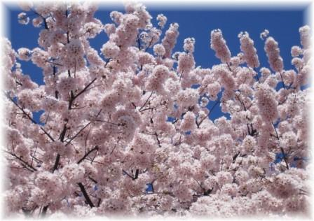 2006_04_02_02.jpg