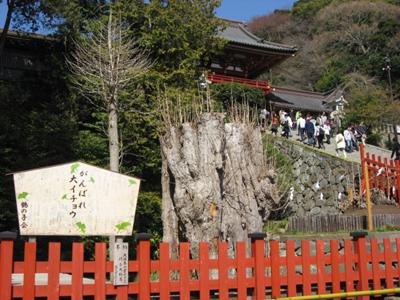 2011年4月11日開催 東日本大震災 追善供養 復興祈願祭 鶴岡八幡宮