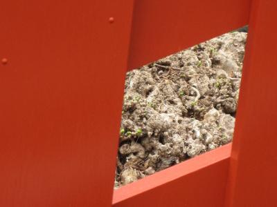 鎌倉・鶴岡八幡宮の大イチョウ