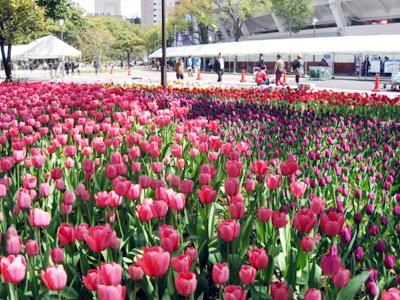 よこはま花と緑のスプリングフェア2011~チューリップまつり