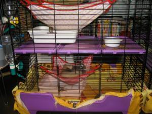 cage050912.jpg