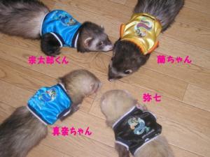 yashichi0509171.jpg
