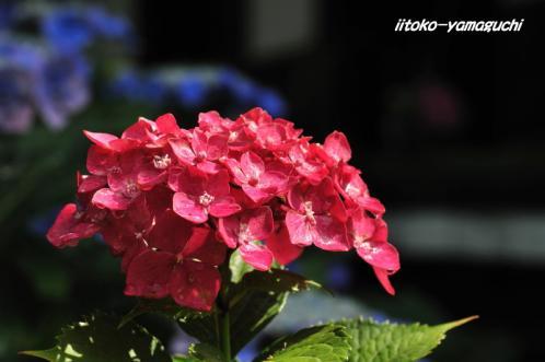 花供養阿弥陀寺03