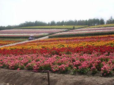 PICT0051花畑2