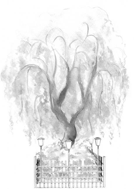 枝垂桜 原画