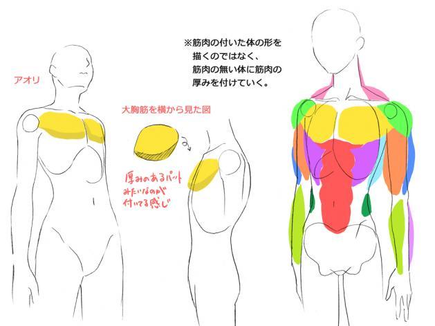筋肉の付け方