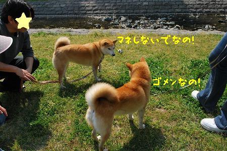 DSC_0224-3.jpg