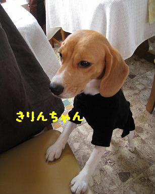 IMG_6322-2.jpg