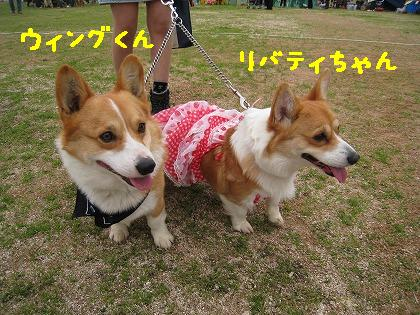 IMG_6592-2.jpg