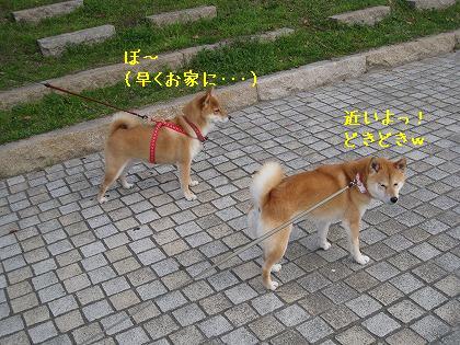 IMG_6695-2.jpg
