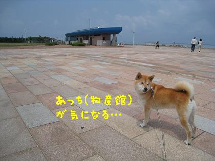 IMG_7721-2.jpg
