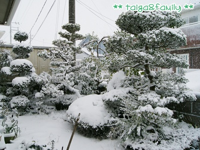 DSC01031.jpg