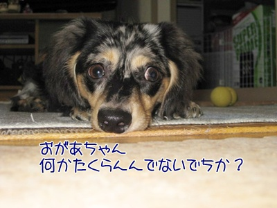 IMG_2267.jpg