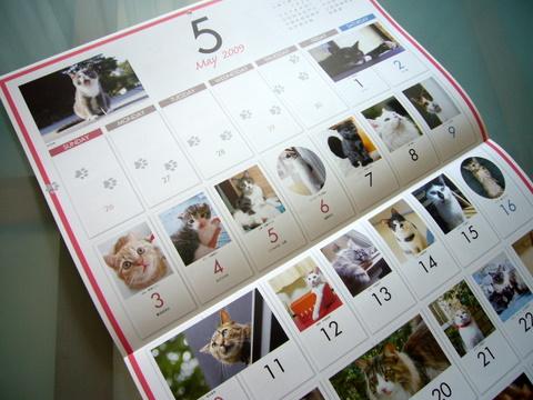 猫めくりカレンダー2