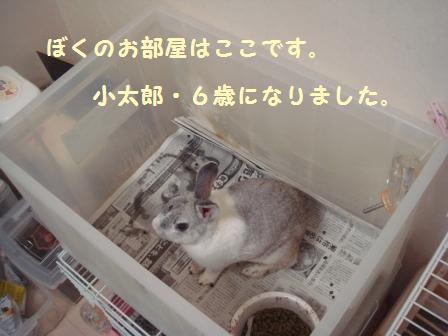 2009.7.12 小太郎 1