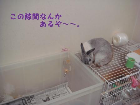 2009.7.12 小太郎 3
