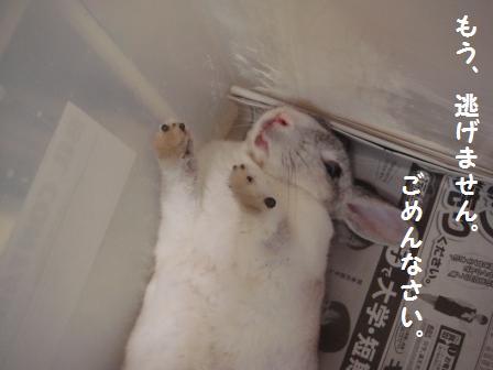 2009.7.12 小太郎 4