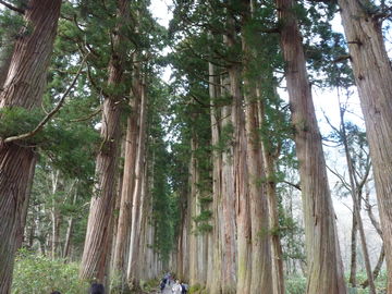 戸隠杉並木