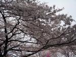 2009-04-04飛鳥山桜、桜餅 006