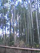 20051119171205