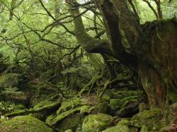 もののけ姫の森2[1].08.5.25