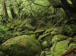 もののけ姫の森1[1].08.5.25