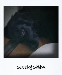 sleeply simba