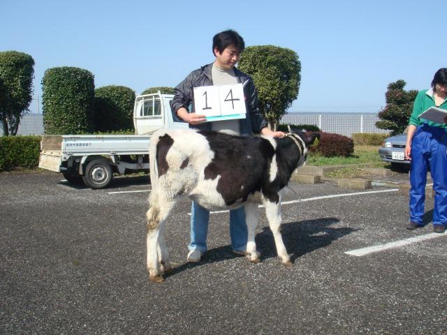 14 suzuki