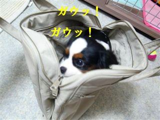 DSC03929_R.jpg