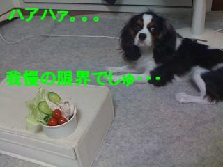 IMG_1285.jpg