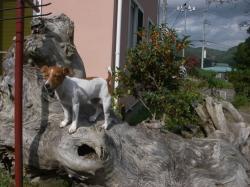 dogs070.jpg