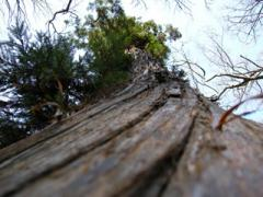 7.大好きな木
