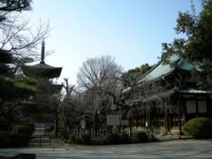 4.豪徳寺