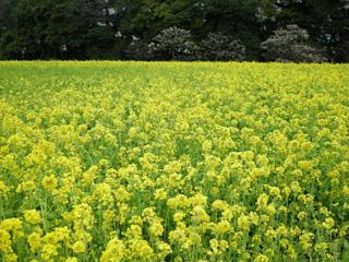 7.お花畑