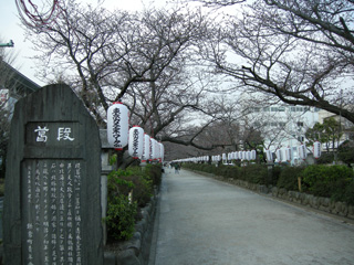 2.段葛の桜並木
