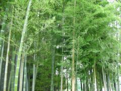 15.竹林
