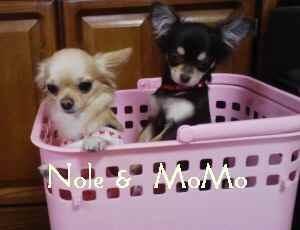 blog2008042502.jpg