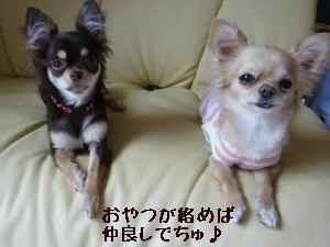 blog2008050406.jpg