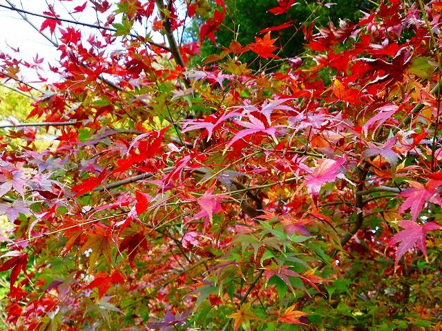 博龍(ひろたつ)@糟屋郡須恵町~ニュードラゴンと紅葉と「どぎ」初体験~