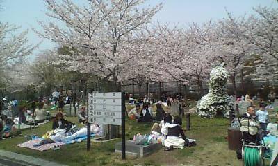 天王寺公園花見