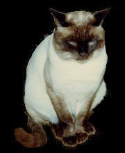 猫プレデター
