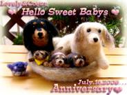 Anniversary★/羊毛人形