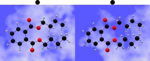 飛び出すフタル酸ジブチル(交差法)