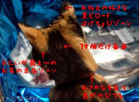 090228_4854b.jpg