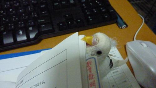 20110227勉強のじゃま怪獣