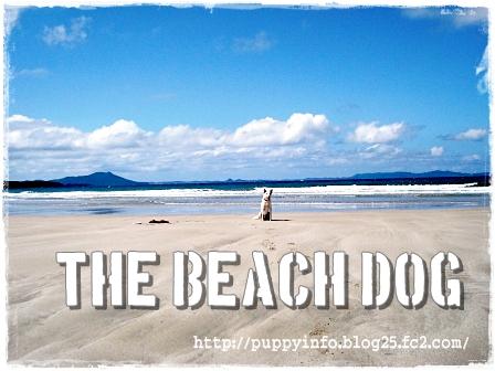 チワワ・ポメラニアン・トイプードルの子犬販売のブリーダーなら -the Beach Dog -